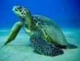 Picture of reptile