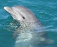 Picture of dolphin